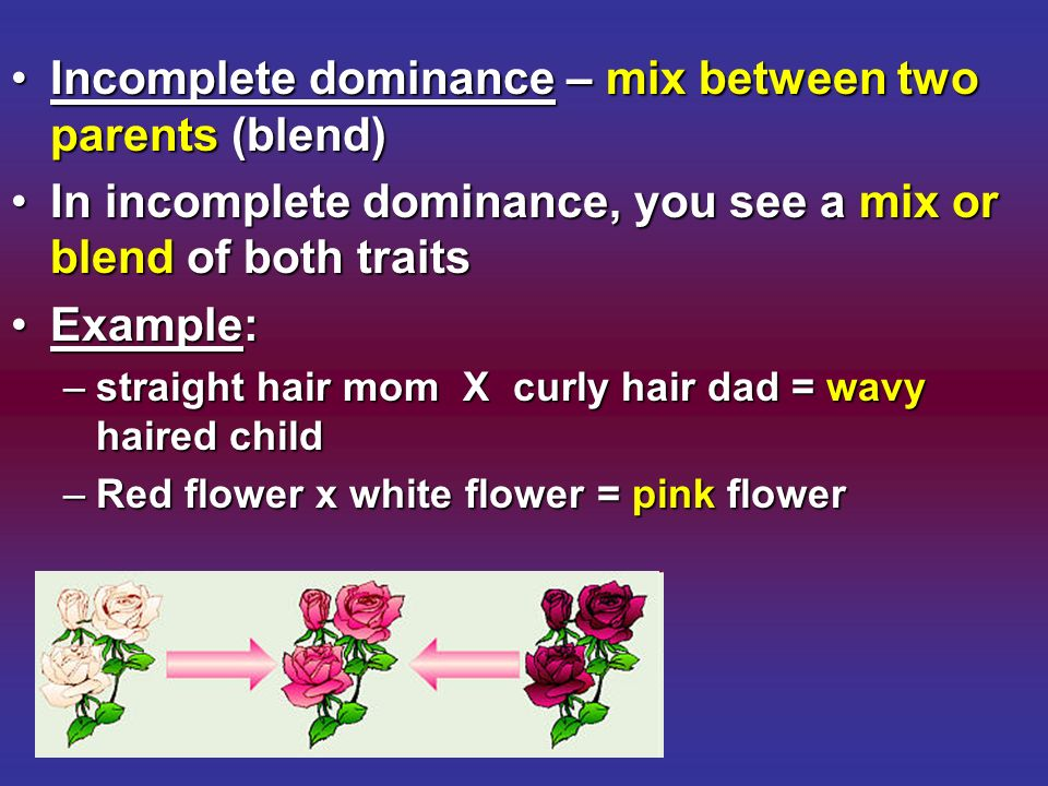 Incomplete dominance – mix between two parents (blend)Incomplete dominance – mix between two parents (blend) In incomplete dominance, you see a mix or