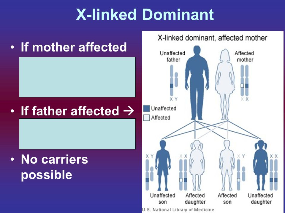 X-linked Dominant If mother affected equal chance of sons / daughters affected If father affected All daughters will have, sons ok No carriers possibl
