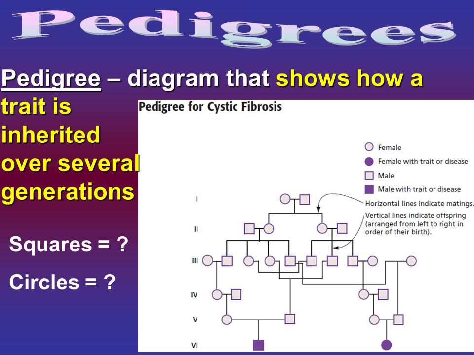 Study the simple pedigree.The man is red (pink) because…?Study the simple pedigree.