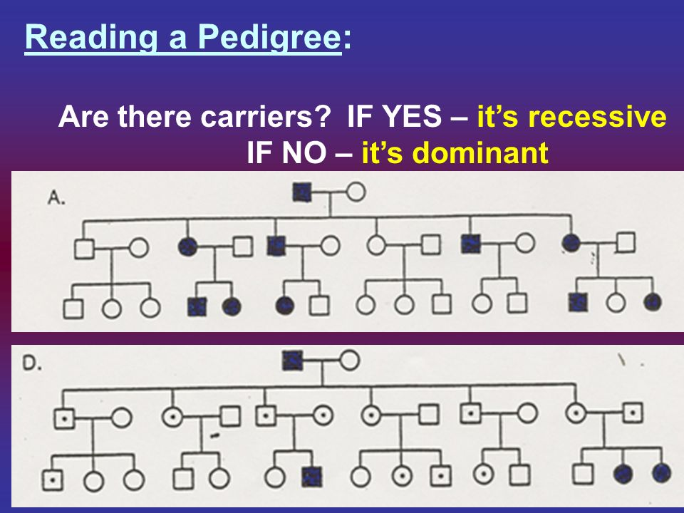 Reading a Pedigree: If its recessive, are there any male carrier.