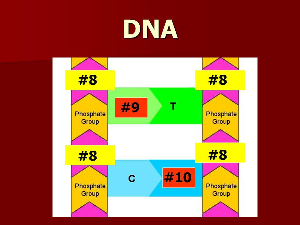 DNA #8 #9 #10