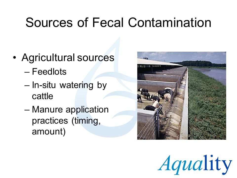 Sources of Fecal Contamination Agricultural sources –Feedlots –In-situ watering by cattle –Manure application practices (timing, amount)