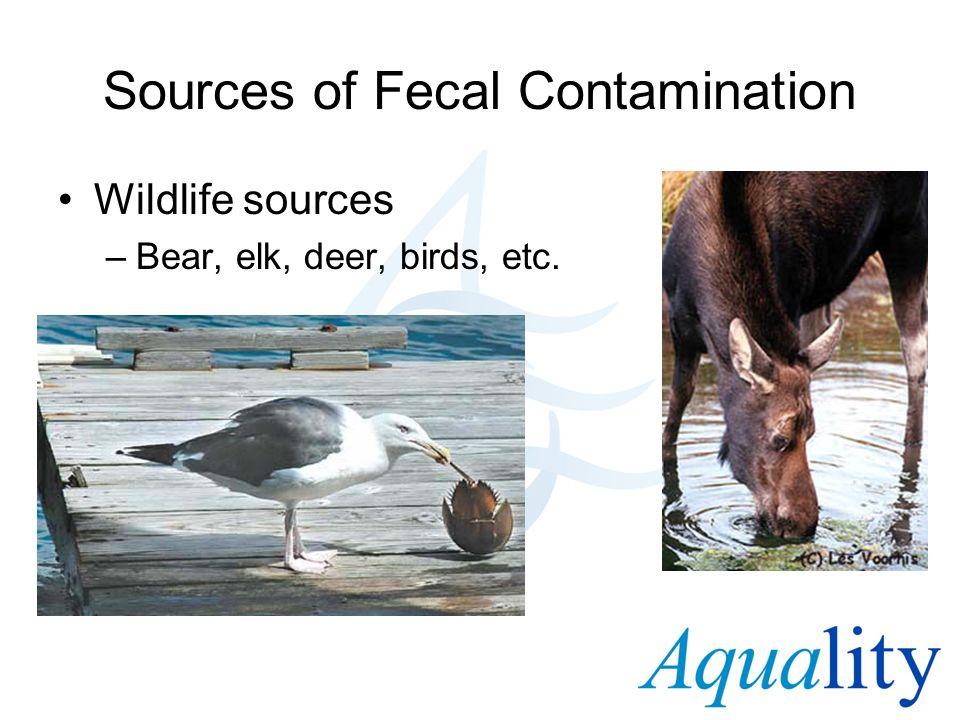 Sources of Fecal Contamination Wildlife sources –Bear, elk, deer, birds, etc.