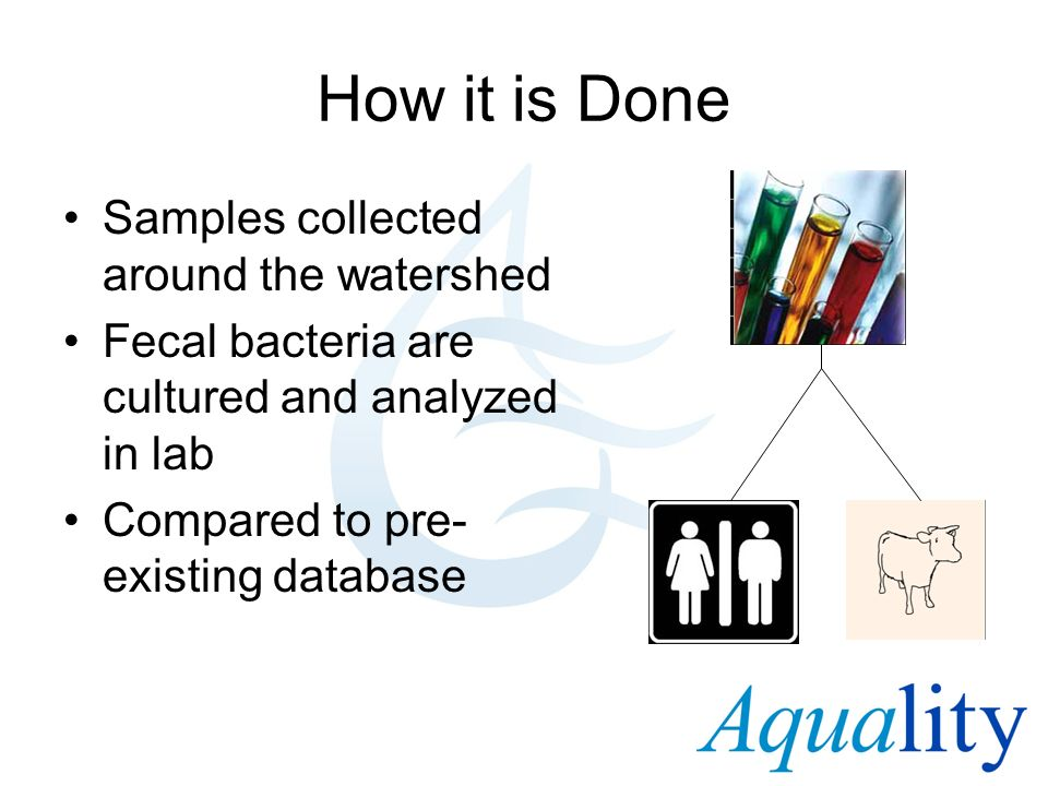 How it is Done Samples collected around the watershed Fecal bacteria are cultured and analyzed in lab Compared to pre- existing database