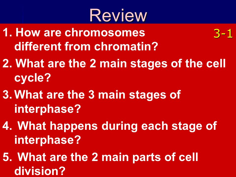 Copyright © by Holt, Rinehart and Winston. All rights reserved. 1. How are chromosomes different from chromatin? 2. What are the 2 main stages of the