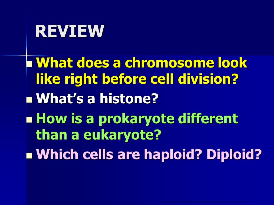 Copyright © by Holt, Rinehart and Winston. All rights reserved. REVIEW What does a chromosome look like right before cell division? What does a chromo