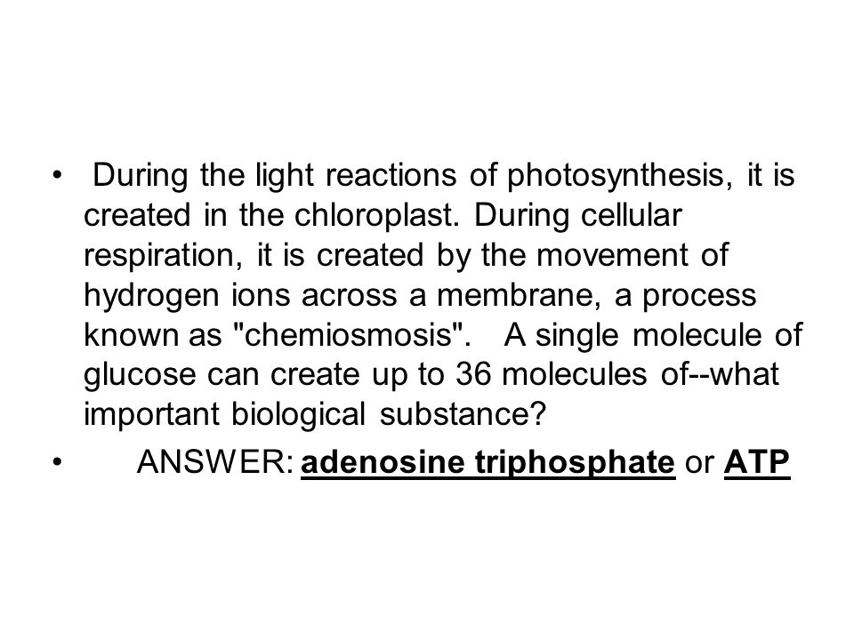 During the light reactions of photosynthesis, it is created in the chloroplast.