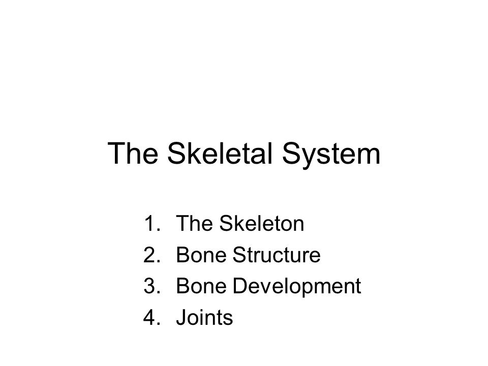 NervousSystem Integumentary System Skeletal System Muscular System Circulatory System Respiratory System Digestive System Excretory System Endocrine S