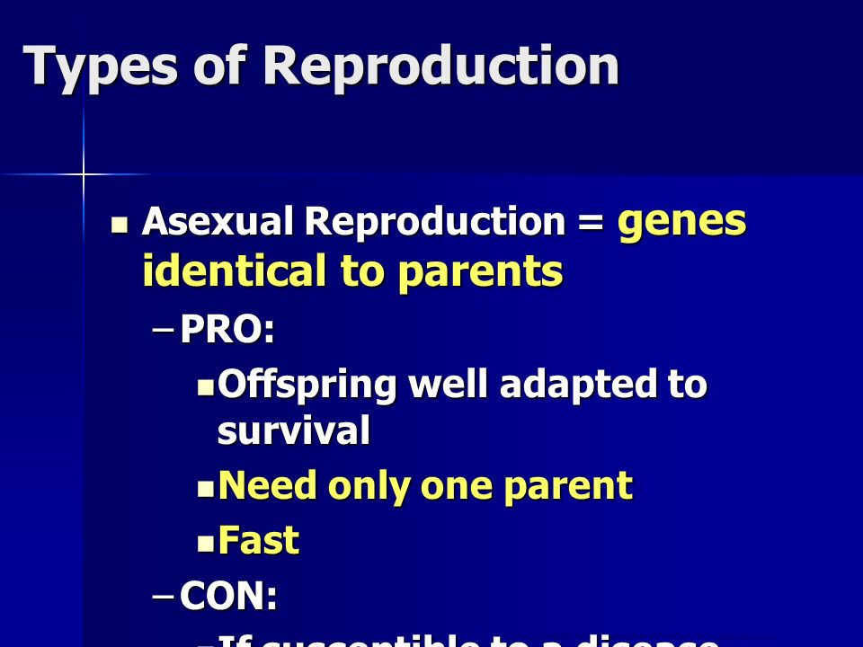 Copyright © by Holt, Rinehart and Winston. All rights reserved. Asexual Reproduction = genes identical to parents Asexual Reproduction = genes identic