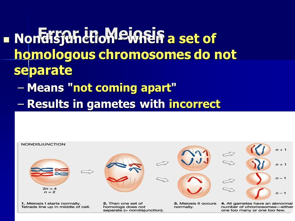 Copyright © by Holt, Rinehart and Winston. All rights reserved. Error in Meiosis Nondisjunction - when a set of homologous chromosomes do not separate