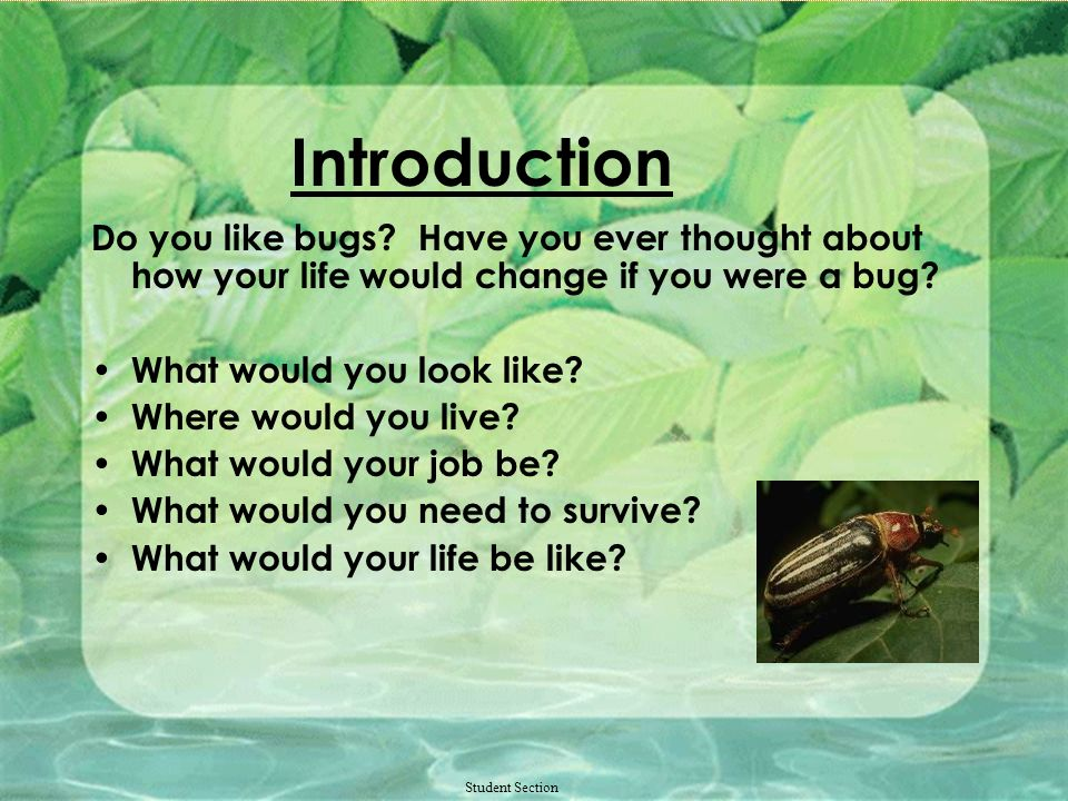 The Life of an Insect Introduction Task Process Evaluation Conclusion Teacher Page Credits and References Student Section