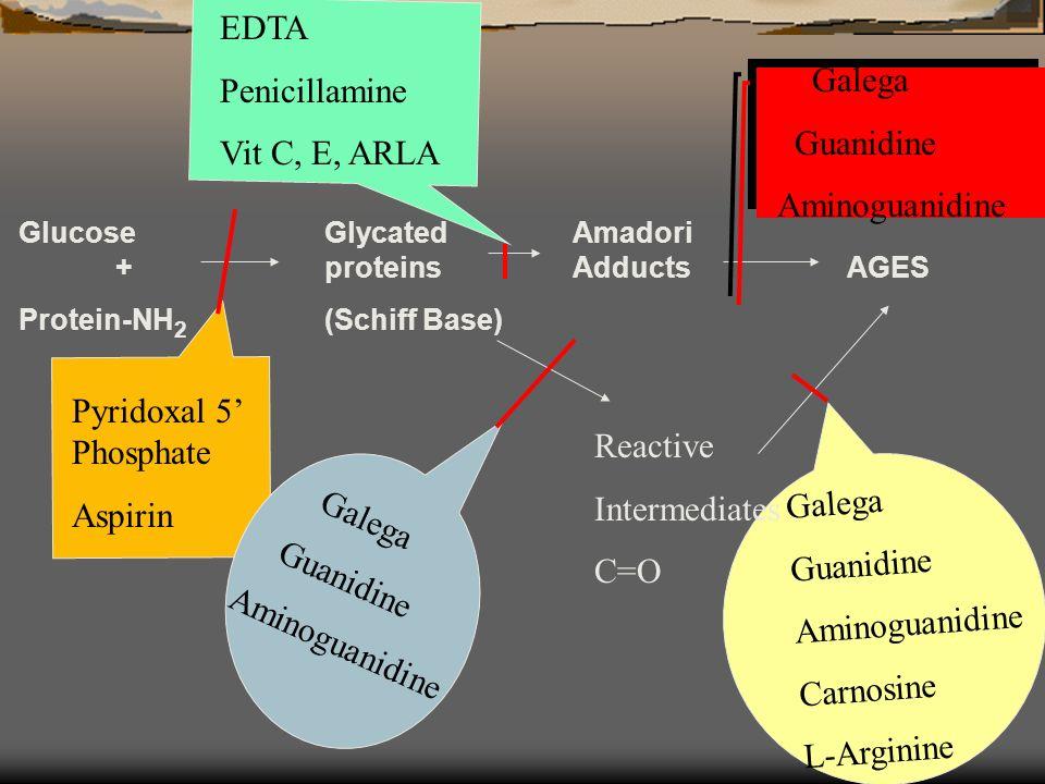 GlucoseGlycated Amadori +proteins AdductsAGES Protein-NH 2 (Schiff Base) Pyridoxal 5 Phosphate Aspirin Galega Guanidine Aminoguanidine EDTA Penicillamine Vit C, E, ARLA Galega Guanidine Aminoguanidine Galega Guanidine Aminoguanidine Carnosine L-Arginine Reactive Intermediates C=O