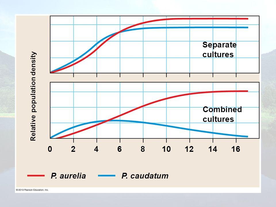 Relative population density Separate cultures Combined cultures P. caudatum 0246810121416 P. aurelia