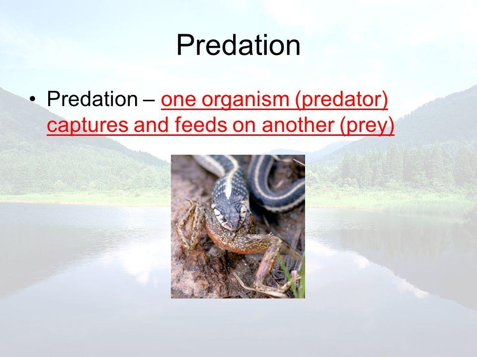 Predation Predation – one organism (predator) captures and feeds on another (prey)