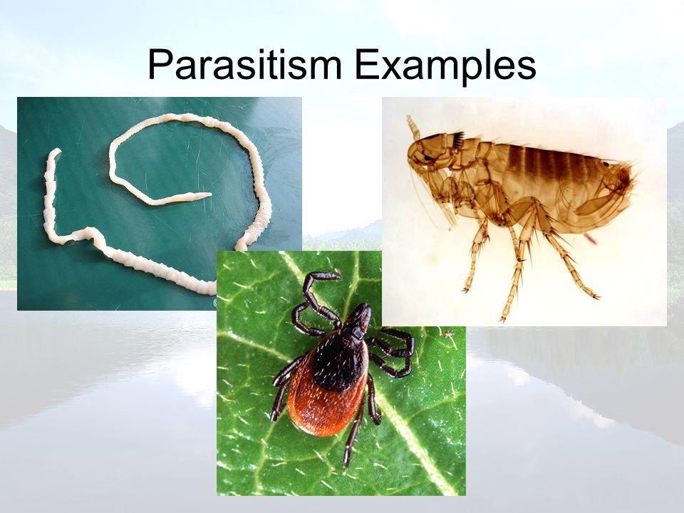 Parasitism Examples