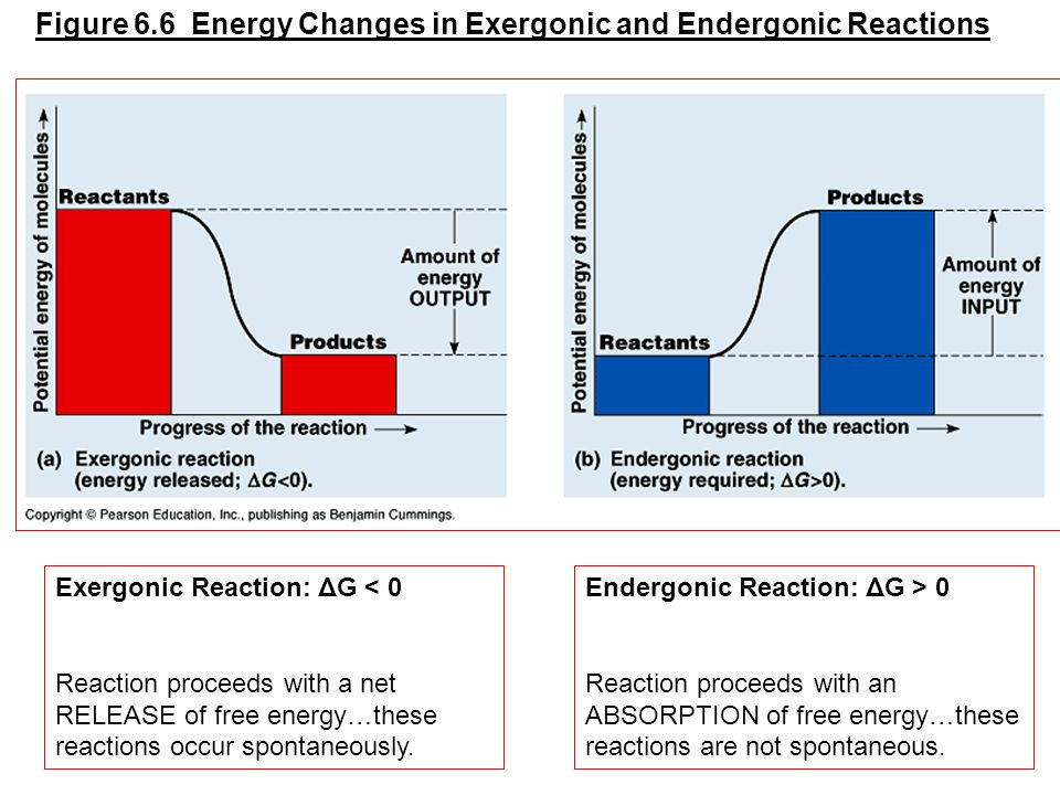 Figure 6.6 Energy Changes in Exergonic and Endergonic Reactions Exergonic Reaction: ΔG < 0 Reaction proceeds with a net RELEASE of free energy…these r