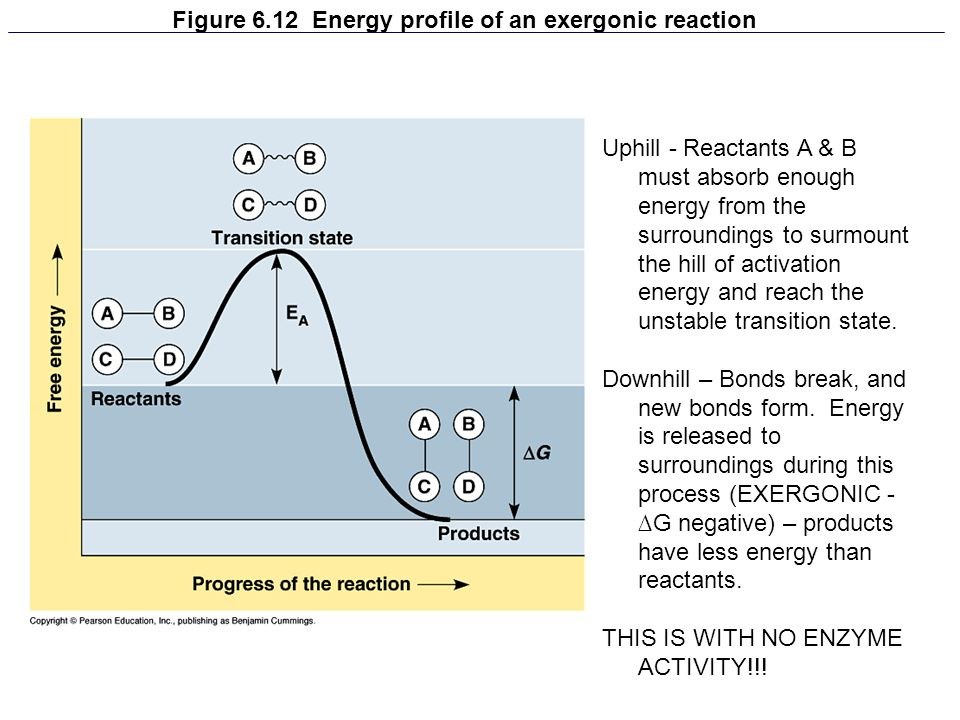 Figure 6.12 Energy profile of an exergonic reaction Uphill - Reactants A & B must absorb enough energy from the surroundings to surmount the hill of a