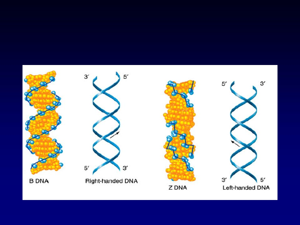 In high concentration of salts or in a dehydrated state, (75% humidity) DNA exists in the A- form, which has 11 nucleotide-pairs per turn. Recently, c