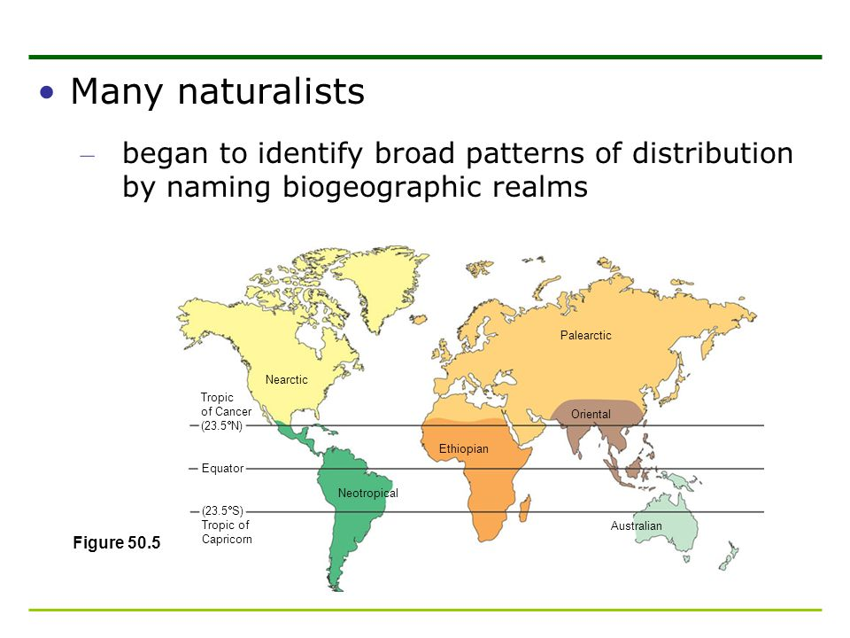 Many naturalists – began to identify broad patterns of distribution by naming biogeographic realms Tropic of Cancer (23.5 N) Equator Nearctic Neotropi