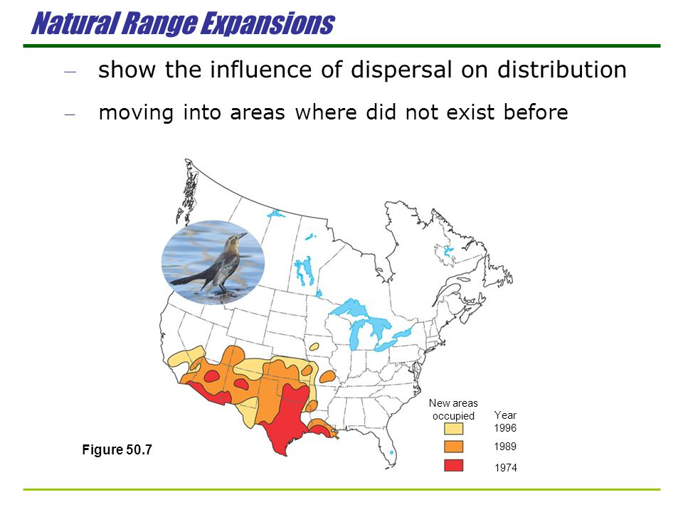 New areas occupied Year 1996 1989 1974 Natural Range Expansions – show the influence of dispersal on distribution – moving into areas where did not ex