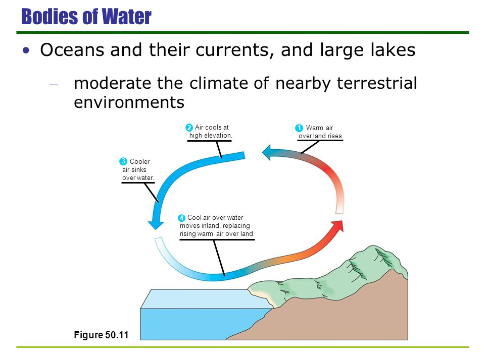 Bodies of Water Oceans and their currents, and large lakes – moderate the climate of nearby terrestrial environments Figure 50.11 Cooler air sinks ove
