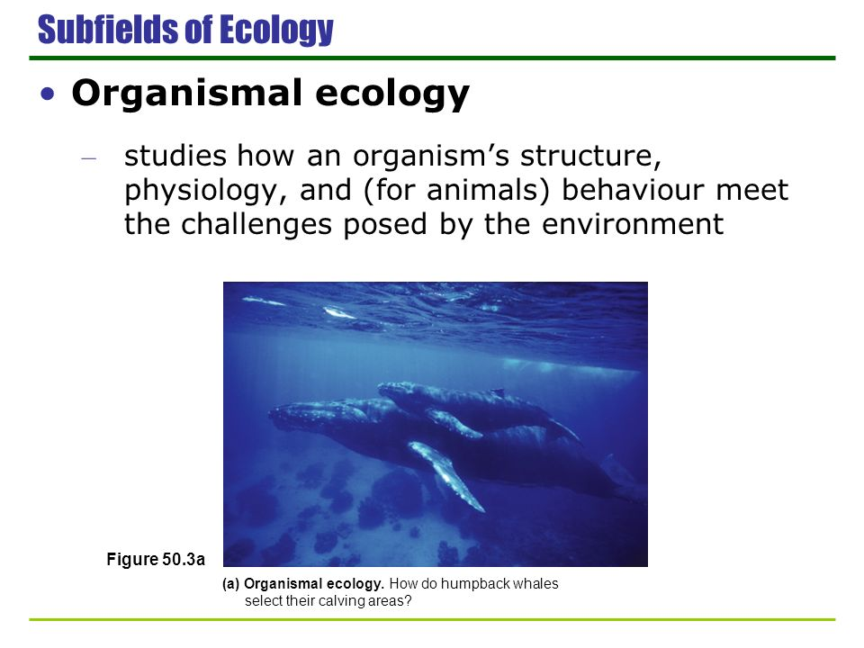 Subfields of Ecology Organismal ecology – studies how an organisms structure, physiology, and (for animals) behaviour meet the challenges posed by the