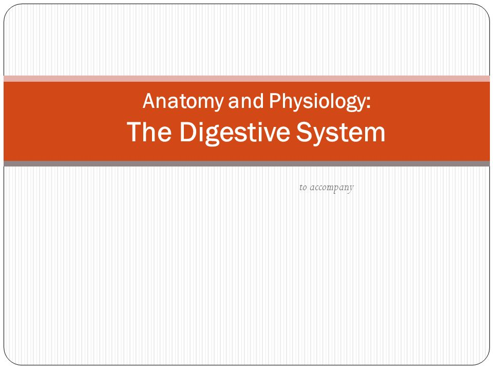 to accompany Anatomy and Physiology: The Digestive System