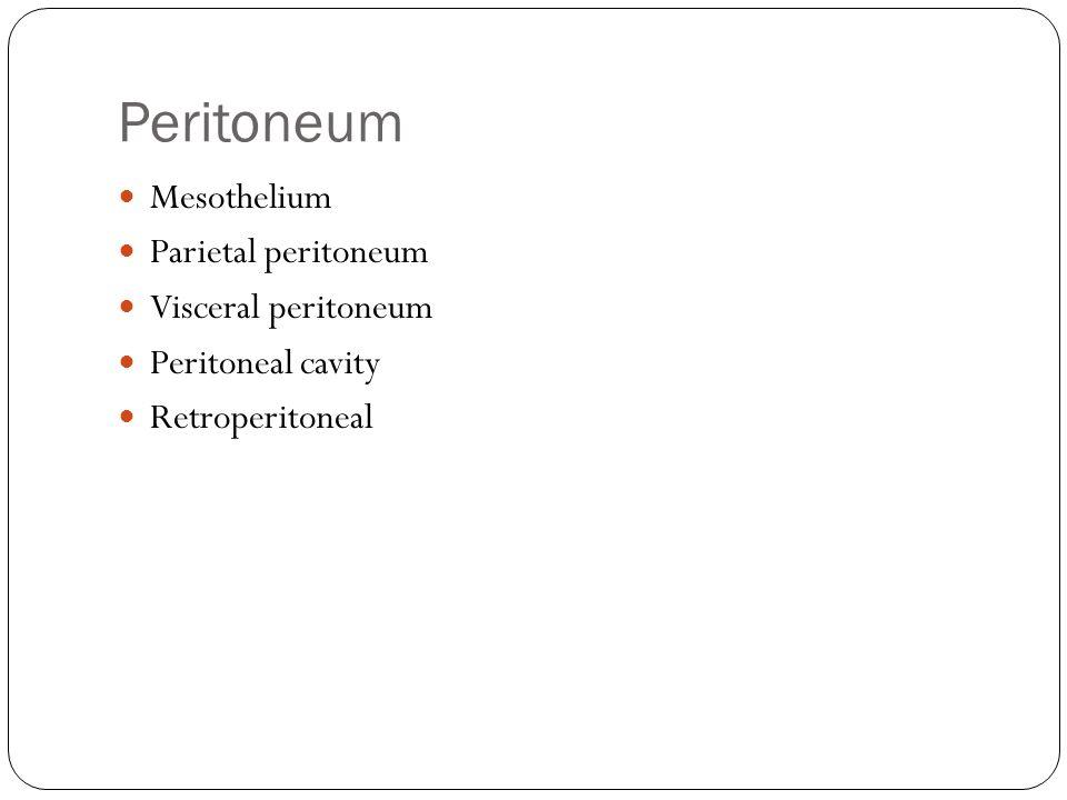 Peritoneum Mesothelium Parietal peritoneum Visceral peritoneum Peritoneal cavity Retroperitoneal