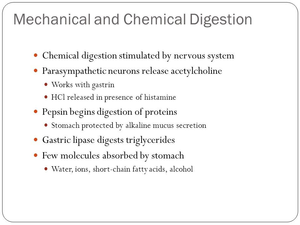 Mechanical and Chemical Digestion Chemical digestion stimulated by nervous system Parasympathetic neurons release acetylcholine Works with gastrin HCl