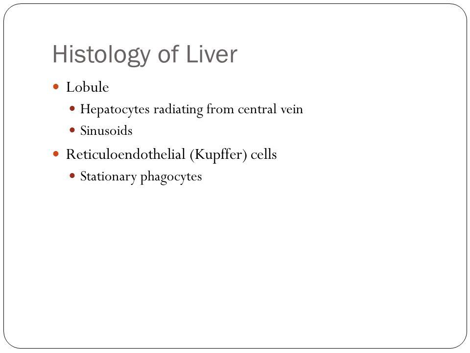 Histology of Liver Lobule Hepatocytes radiating from central vein Sinusoids Reticuloendothelial (Kupffer) cells Stationary phagocytes