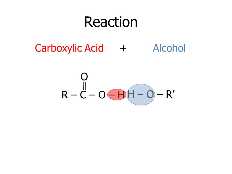Reaction R – C – O – H O H – O – R Carboxylic Acid + Alcohol