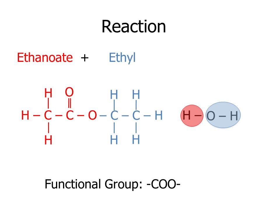 Reaction Ethanoate + Ethyl H – O – H Functional Group: -COO- H H – C – C – O H O H H H H – C – C – H