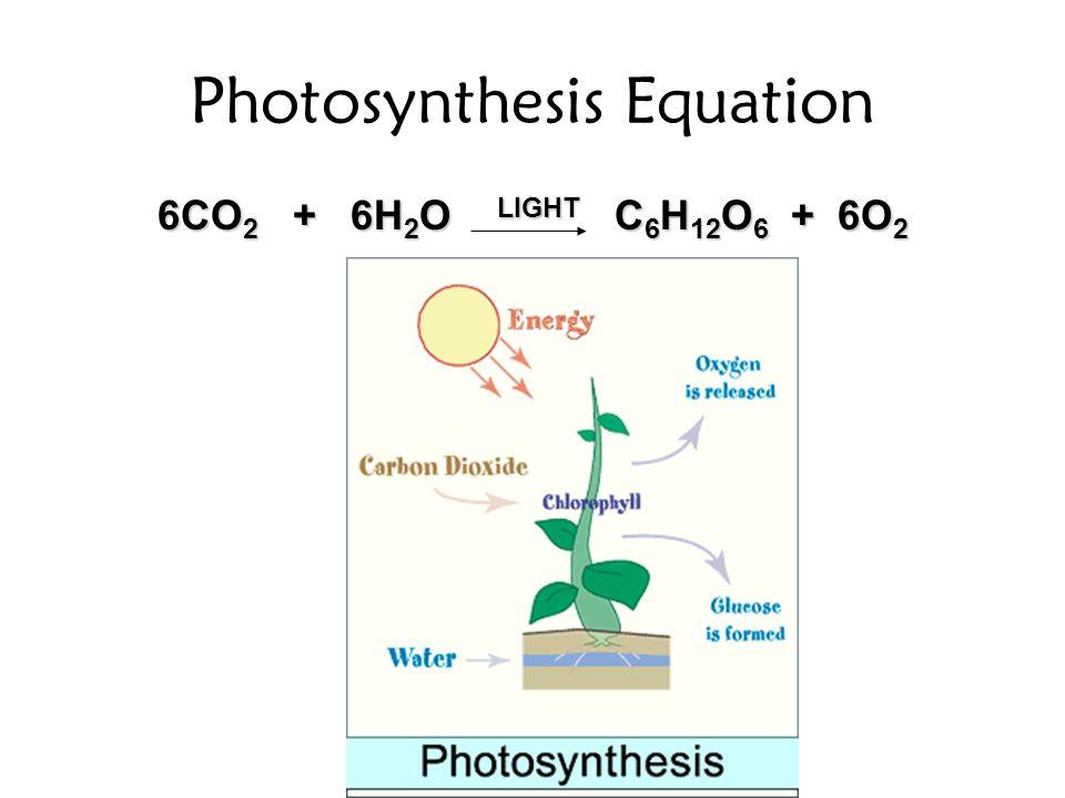 Photosynthesis Equation 6CO 2 + 6H 2 O LIGHT C 6 H 12 O 6 + 6O 2
