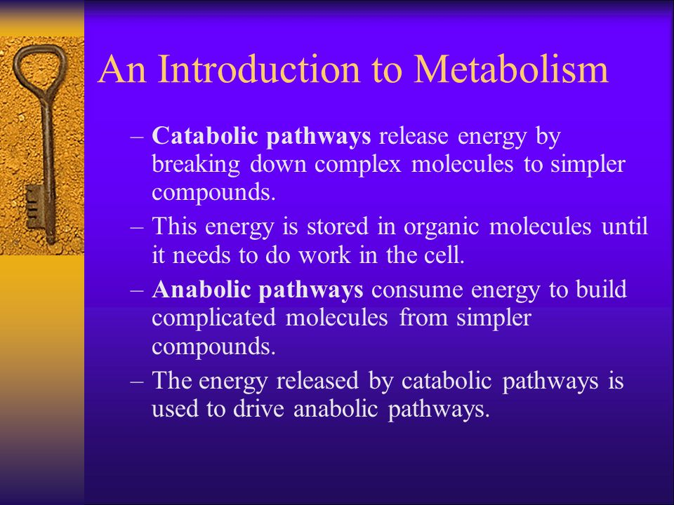 An Introduction to Metabolism –Catabolic pathways release energy by breaking down complex molecules to simpler compounds. –This energy is stored in or