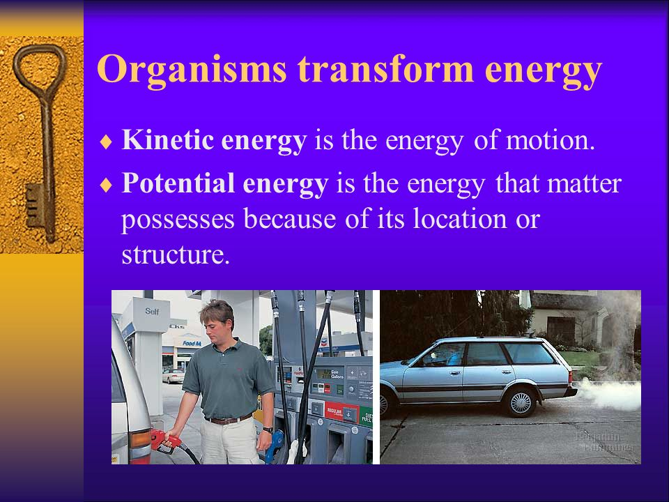 Organisms transform energy Kinetic energy is the energy of motion. Potential energy is the energy that matter possesses because of its location or str