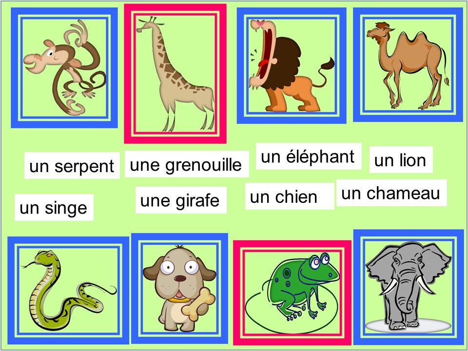 un chien un éléphant un singe une grenouille un serpent un chameau une girafe un lion