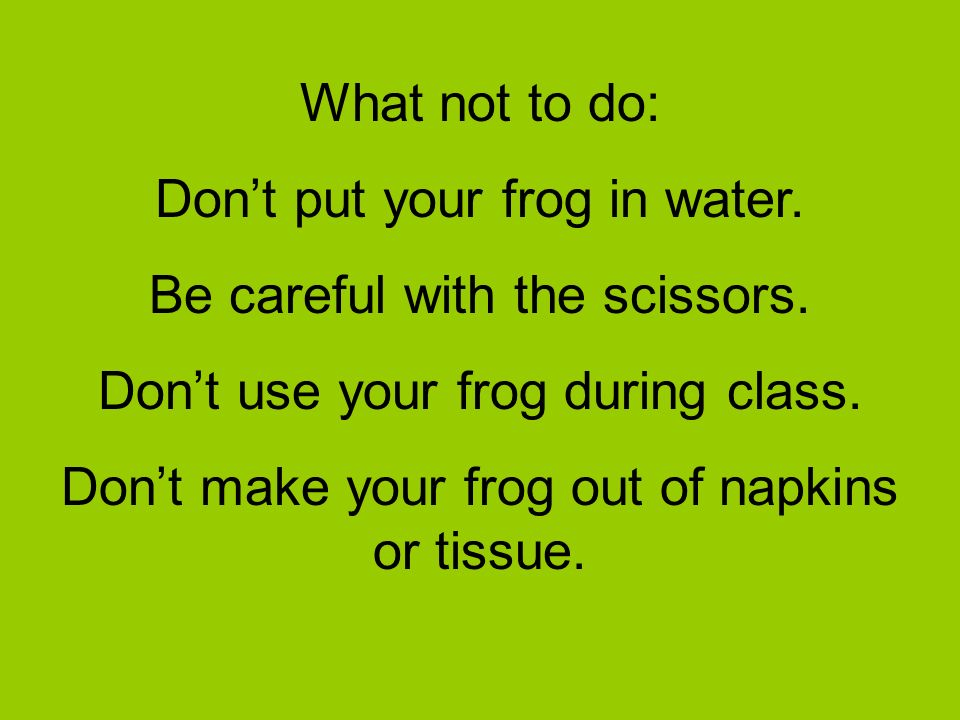What not to do: Dont put your frog in water. Be careful with the scissors. Dont use your frog during class. Dont make your frog out of napkins or tiss