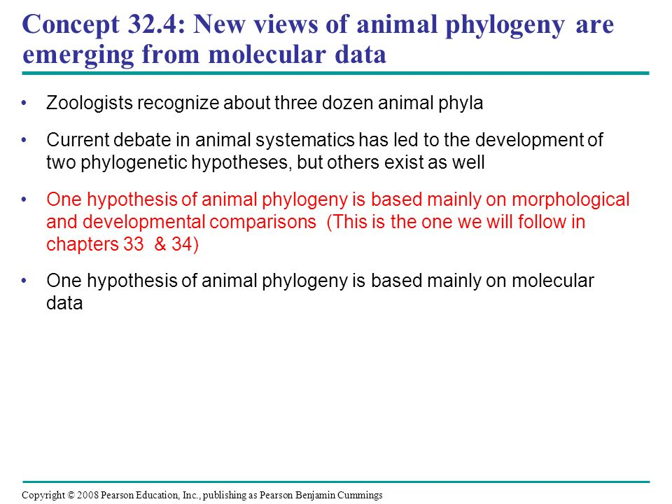 Copyright © 2008 Pearson Education, Inc., publishing as Pearson Benjamin Cummings Concept 32.4: New views of animal phylogeny are emerging from molecu