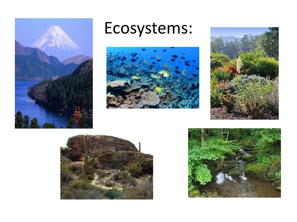 Species: