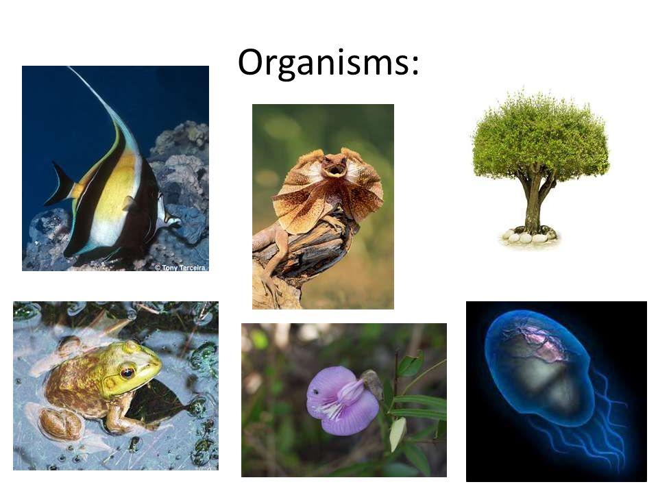 VIS Term DefinitionSentence Picture Organism Population Community Ecosystem Biosphere