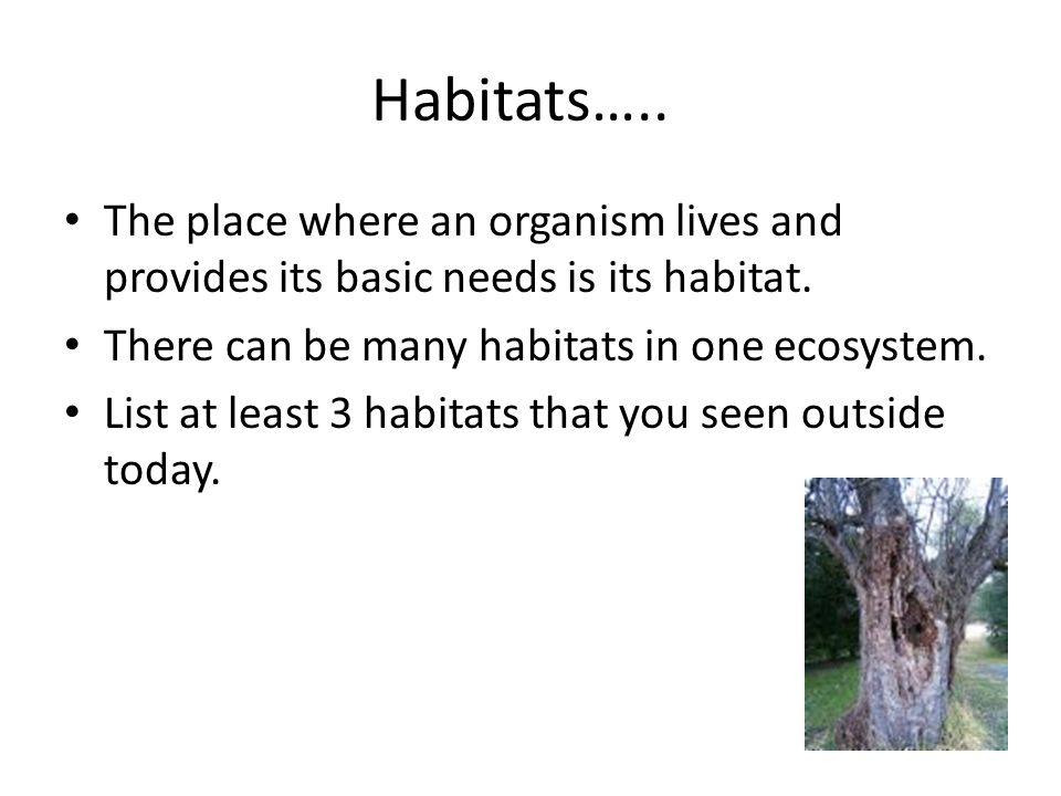 Habitats….. The place where an organism lives and provides its basic needs is its habitat. There can be many habitats in one ecosystem. List at least