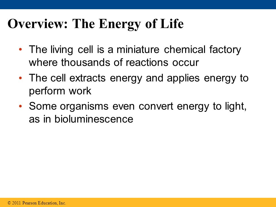 Overview: The Energy of Life The living cell is a miniature chemical factory where thousands of reactions occur The cell extracts energy and applies e