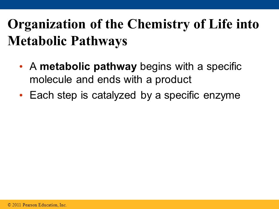 Organization of the Chemistry of Life into Metabolic Pathways A metabolic pathway begins with a specific molecule and ends with a product Each step is