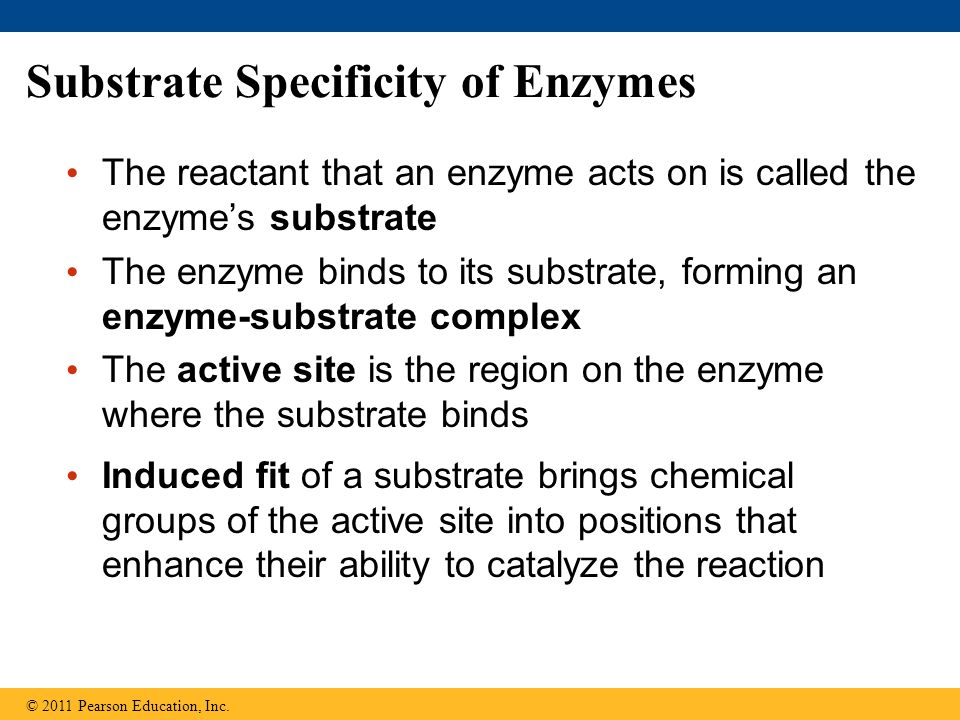 Substrate Specificity of Enzymes The reactant that an enzyme acts on is called the enzymes substrate The enzyme binds to its substrate, forming an enz