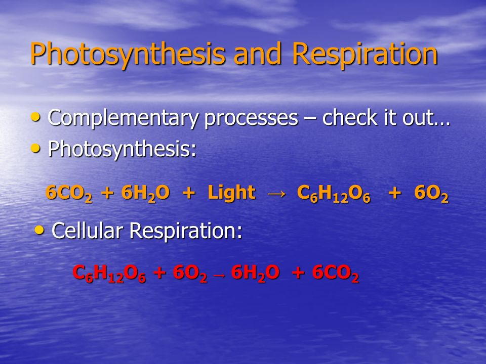 Photosynthesis and Respiration Complementary processes – check it out… Complementary processes – check it out… Photosynthesis: Photosynthesis: 6CO 2 +