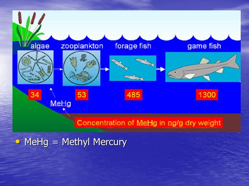 MeHg = Methyl Mercury MeHg = Methyl Mercury