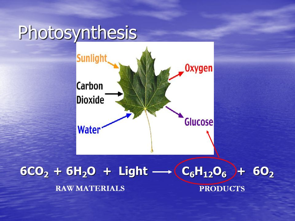 Producers Capture energy from the sun and convert it to food energy (Photosynthesis).
