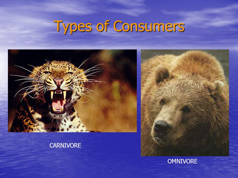 Types of Consumers SCAVENGERS
