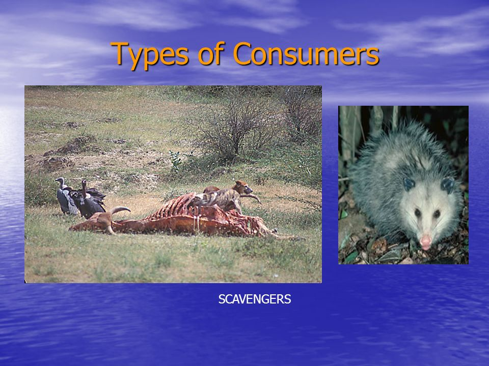 Decomposers After a consumer dies, nutrients are returned to the soil After a consumer dies, nutrients are returned to the soil Decomposers recycle nutrients back to producers by breaking down dead matter.