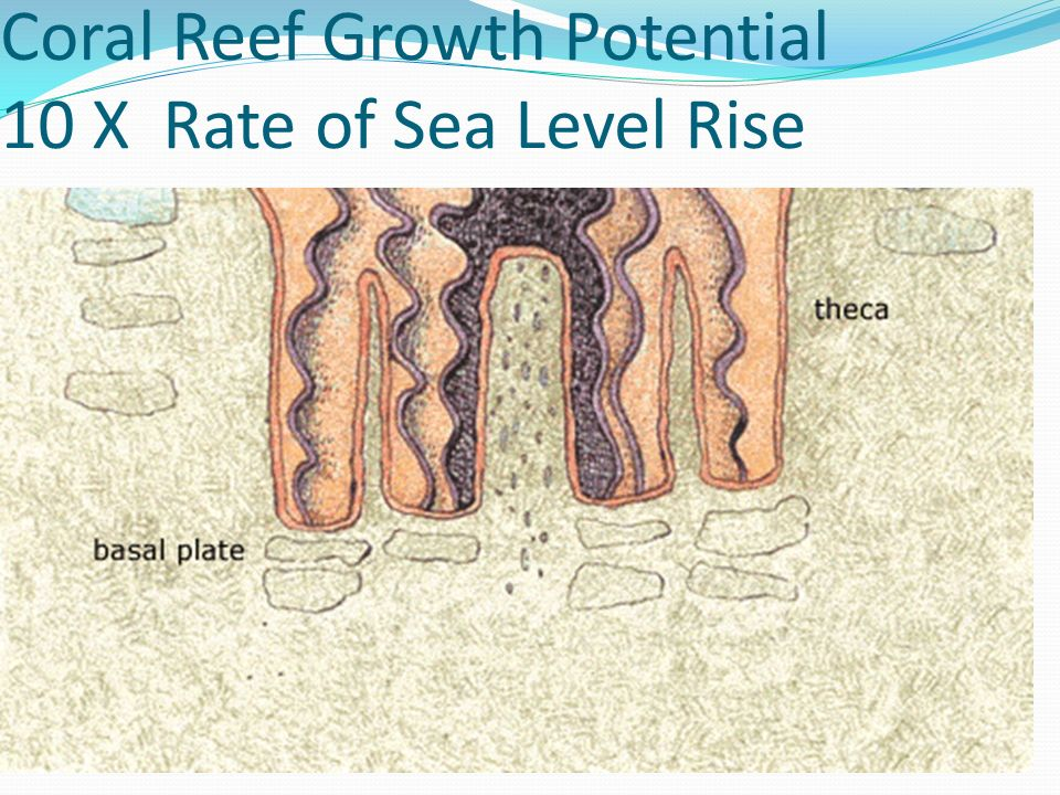 Coral Reef Growth Potential 10 X Rate of Sea Level Rise